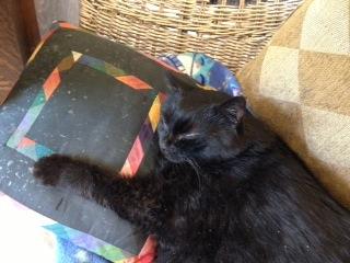 Mosie, sleeping on her favorite pillow