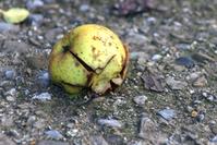 rotten-apple-1193135